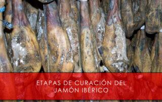 etapas de curación del jamón ibérico