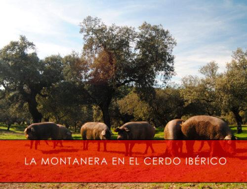 La montanera en el cerdo ibérico