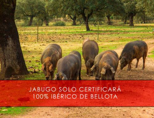 Jabugo solo certificará 100% ibérico de bellota