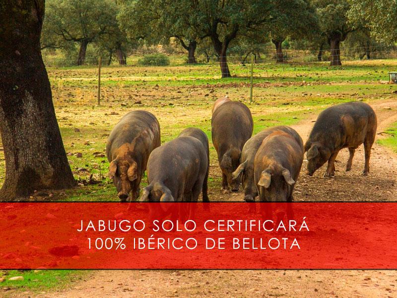 Jabugo solo certificará 100% ibérico de bellota - La Casa del Jamón